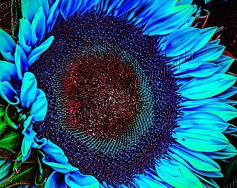 Turquoise Sunflower Summer