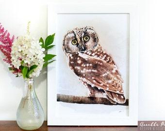 Watercolor boreal owl, print A4