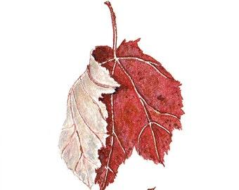 Maple Leaf #3