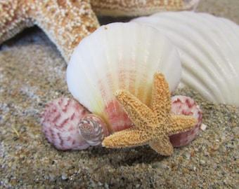 Seashell Sugar Starfish With Pink Umboniums Shell Hair Barrette- Mermaid Hair, Wedding Accessories