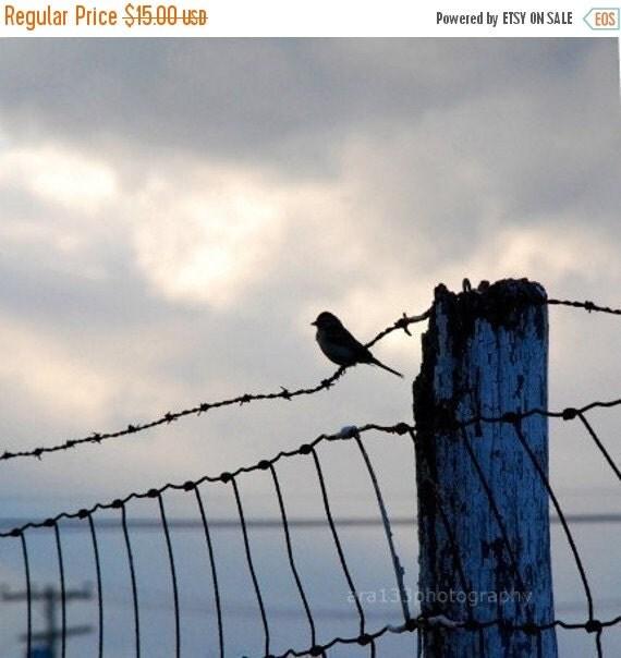 40% OFF SALE Bird Photography Gray and Blue Wall Decor Animal Photo Nature Decor Landscape Photo 5x5 inch Fine Art PhotographyPrint On The F