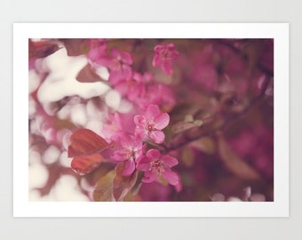 flower photo- pink- dreamy- Remember Yesterday fine art photograph- pretty flower wall art- home decor- romantic