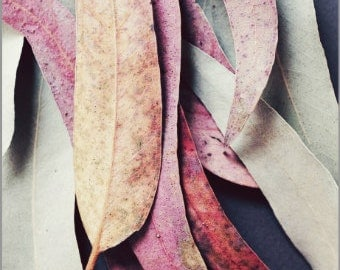 "Botanical photography nature wall art plant leaves sage mauve pink rustic wall decor ""Colorful Eucalyptus Leaves"""