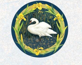 Mute Swan Greeting Card by Valerie Greeley