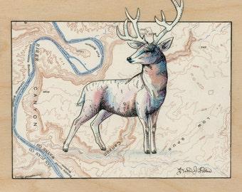 Deer art on topography map, Archival print, wildlife illustration, animal print, wall art Deer illustration, buck art