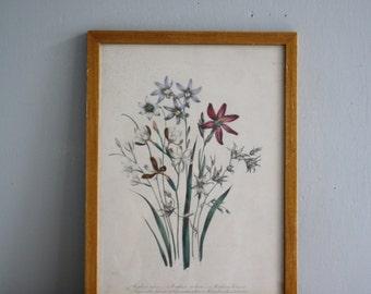 vintage framed botancical print