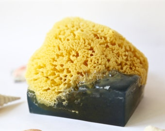 Sea Sponge Soap/ Organic Soap/ LARGE SOAP/ Caribbean Queen