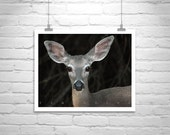 Wildlife Photography, Forest Deer, Fine Art Photography, Nature Photography, Wildlife Art, Deer Picture, Cute Animals, Nature Conservancy