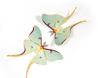 "Male 3.5"" Luna Moth Papercut Decoration"