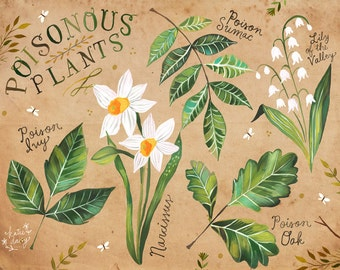 Poisonous Plants | Nature Chart | Educational Wall Art | Outdoorsy | Katie Daisy | 8x10 | 11x14