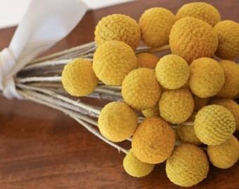 Mini Billy balls, Bunch of dried billy balls,  Craspedia, Bunch of craspedia, Billy Buttons, Yellow Dried decor, wedding decor