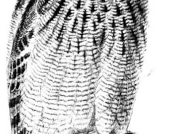 Owl bird png file clip art stamp Digital graphics animal Images Download
