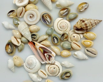 Mixed Style, Type and Size Shell Beads - GM412