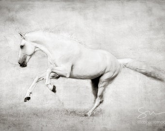 Black and White Horse Photography, White Horse Picture, Fine Art Photography of a running white stallion, Surreal Horse Photography