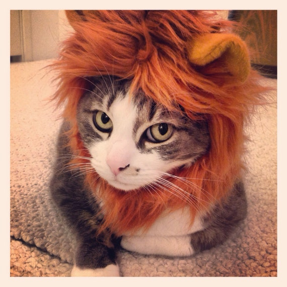 Lion Mane for Cats & Dogs in signature hat box
