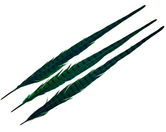 "10 Pieces - 20-22"" Peacock Green Bleached and Dyed Long Ringneck Pheasant Tail Feathersv : 4137"