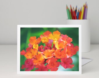 Floral photo note card, bright red orange lantana flower photography blank notecard stationery, a2 or a7