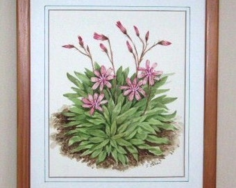 Lewisia in Bloom Orchid Original Watercolor Flower Painting
