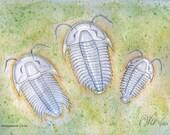 Three Trilobites (9 x 12)