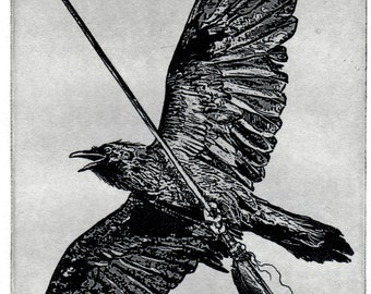 Raven artwork , Raven, crow,  black bird,  Arrow,   etching