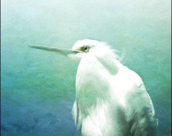 Egret photo, bird art, Florida Keys, nature photography, bird photography, texture art