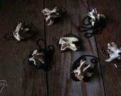 Raccoon Vertebrae - black ball copper chain