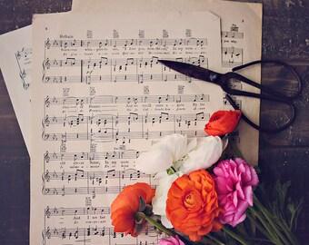 Beautiful Music ~ 8x10 Photo Print