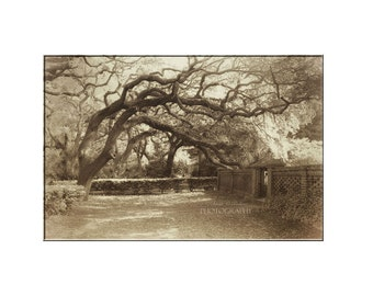 Tree Photography-Sepia Photograph-St Augustine-Park Photography-Fine Art Print-20x24 Print-Live Oak Trees-Vintage Effect-Tree Branches