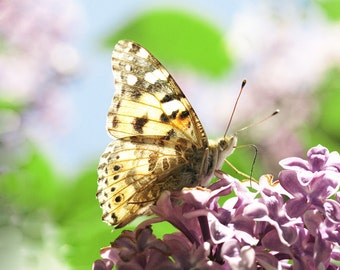 Printable art Digital download Spring photography Butterfly photograph nature lilac purple