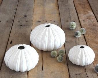 Sea urchin trio, vase trio, 3 bud vases, bud vase, coastal decor, beach, floral supply, floral arrangement, ceramic vase, white vase,