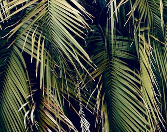 Unique PALM TREE Photography, Green Palm Fronds, Palm Tree Photo, Palm Tree Fronds, Abstract Palm, Minimalism, Green Palm Decor, Nature