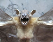 "CLEARANCE 14.5"" Wolf Bat Specimen - SHIP FREE"
