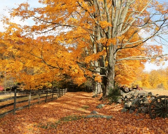 New England - Fall Fine Art Photograph Autumn Nature Landscape Home Decor