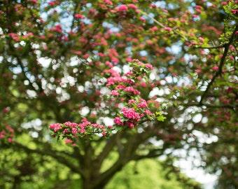 Springtime Flowering Tree