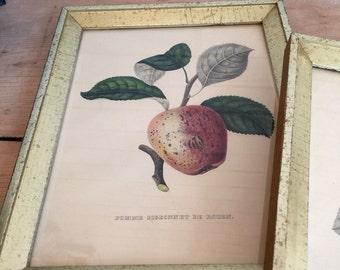 Pair of Vintage Borghese Framed Prints | Fruit Still Life | Kitchen | Italian Farmhouse | Lithographs