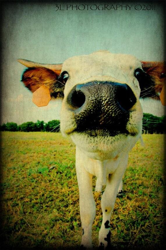 Fine Art Western Texas Rustic Cow Longhorn Photography