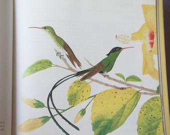 Vintage Birds of Jamaica by Frank Bernal, 1989, First Edition book, Bird Book, Bird art book, Hummingbirds Parrots Finches, Carribbean art
