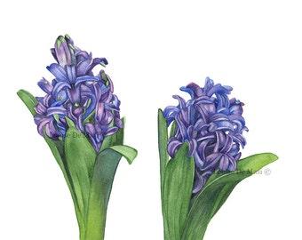 Hyacinth watercolor painting print, Hyacinth print, botanical art, wall art, purple flower wall art, A4 print, H4216