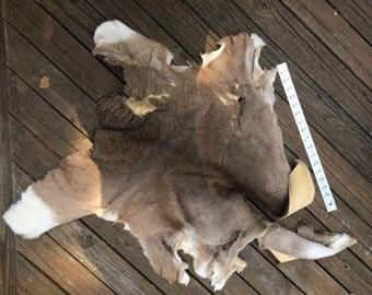 Larger Whitetail Deer Skin Piece for Crafts