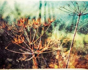 Colour in Winter - original photograph