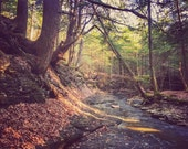Creekside - woods, forest, woodland, water, hike, trail, photography