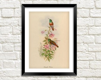 BIRDS on FlOWERS PRINT: Vintage Garden Art Illustration Wall Hanging (A4 / A3 size)