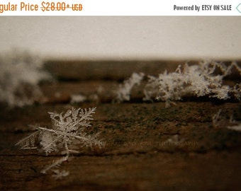 Christmas in July Snowflake Fine Art Photography Nature Rustic Winter Snow Flake White Brown Wood Warm Tones Neutral Christmas Macro Home De