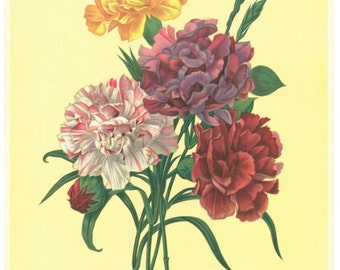 Floral Lithograph 946 by P. J. Redoute - printed in the United States