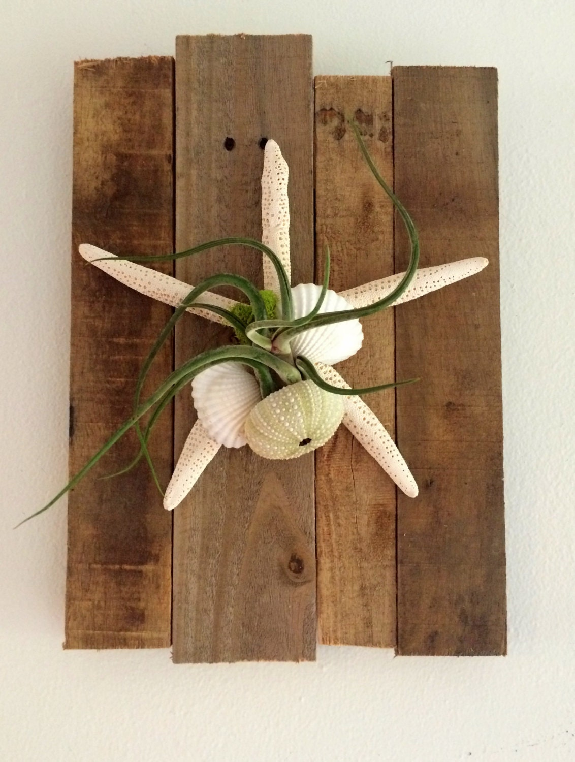 Air plant beach cottage wall art comes fully assembled and for Air plant wall art