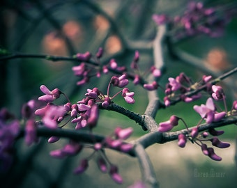 Purple Floral Photography | Spring Decor | Nature Art