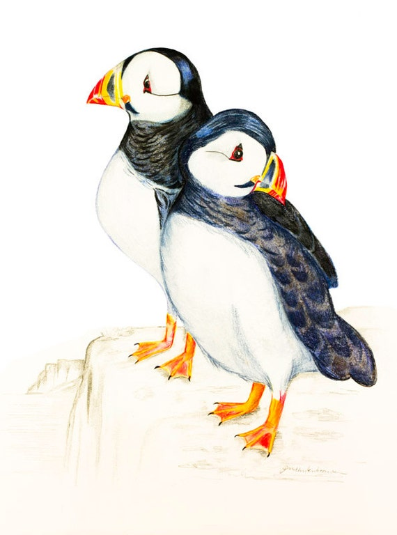 Atlantic Puffin, Fratercula arctica, Bird Illustration, Bird Wall Art, Home Decor,  Art Gift, Print of Pencil Drawing, Treasury Art