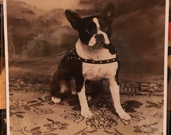 Boston Terrier  Vintage  Print Decoupaged on Wood