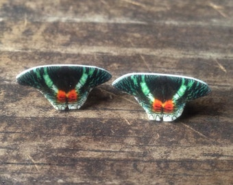 Sunset moth earrings jewelry butterfly insect bug nature