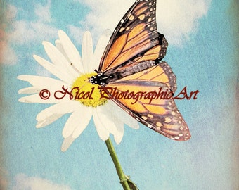 Monarch Butterfly on White Daisy Flower Bedroom Bathroom Art Matted Picture A246